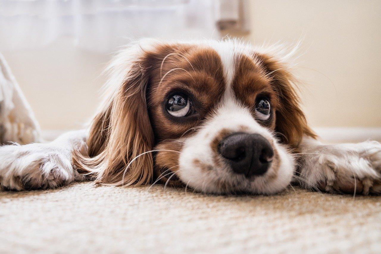Zapłaciłeś już podatek za psa?