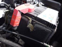 Kuny niszczą samochody!